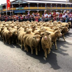 Irish Woolfest Boorowa